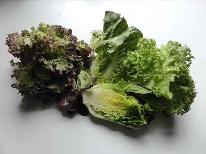 Salat ? Frisch Aus Dem Eigenen Garten - Frische Salate Eigenen Garten Ernten