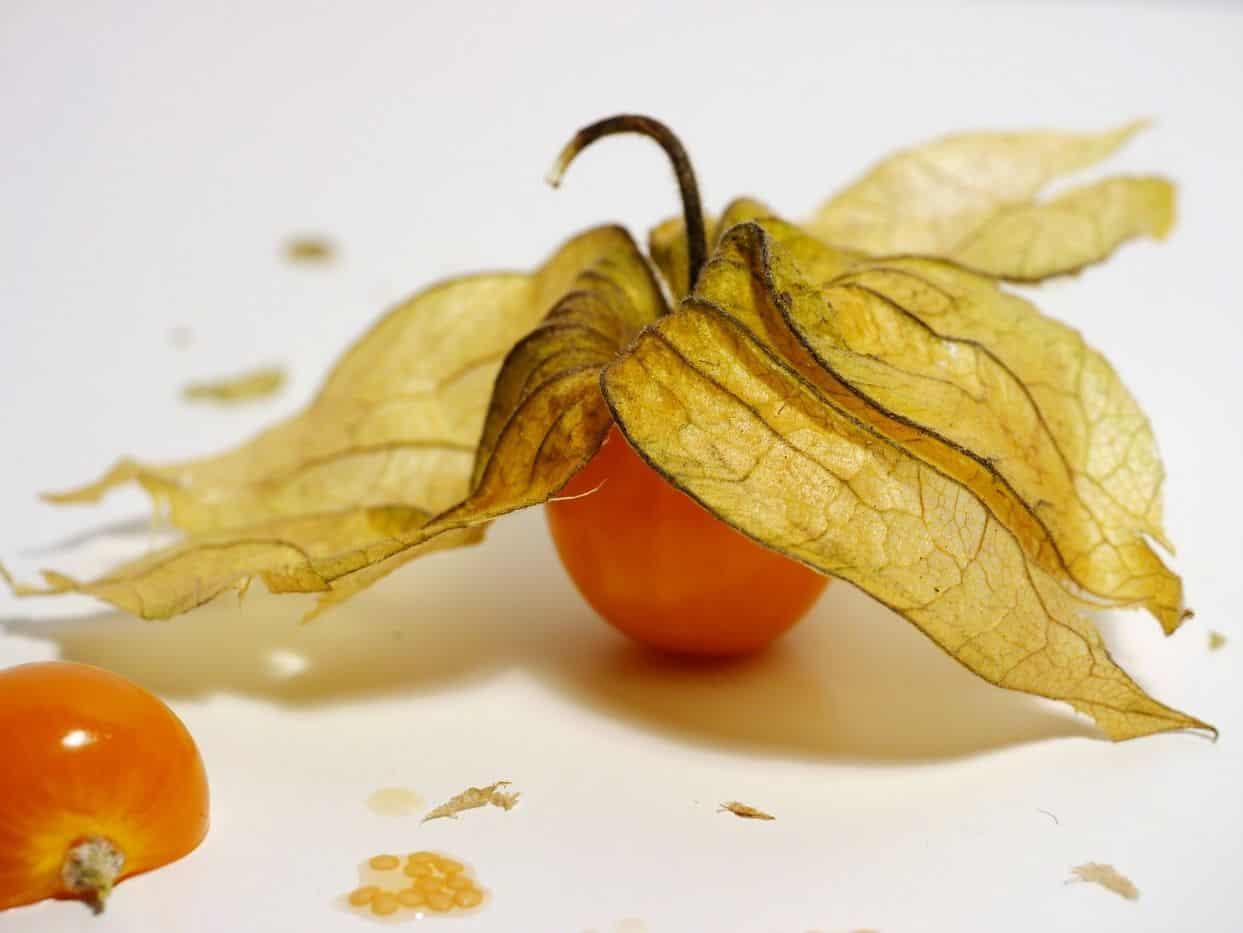 Eine orange Physalisfrucht mit Blättern
