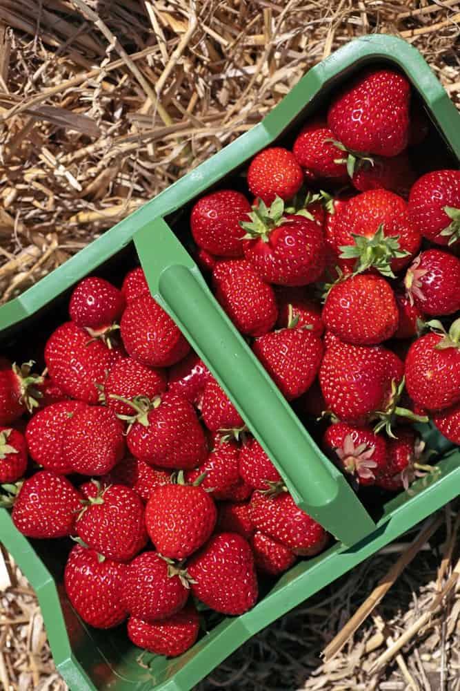 Ein Korb voller Erdbeeren