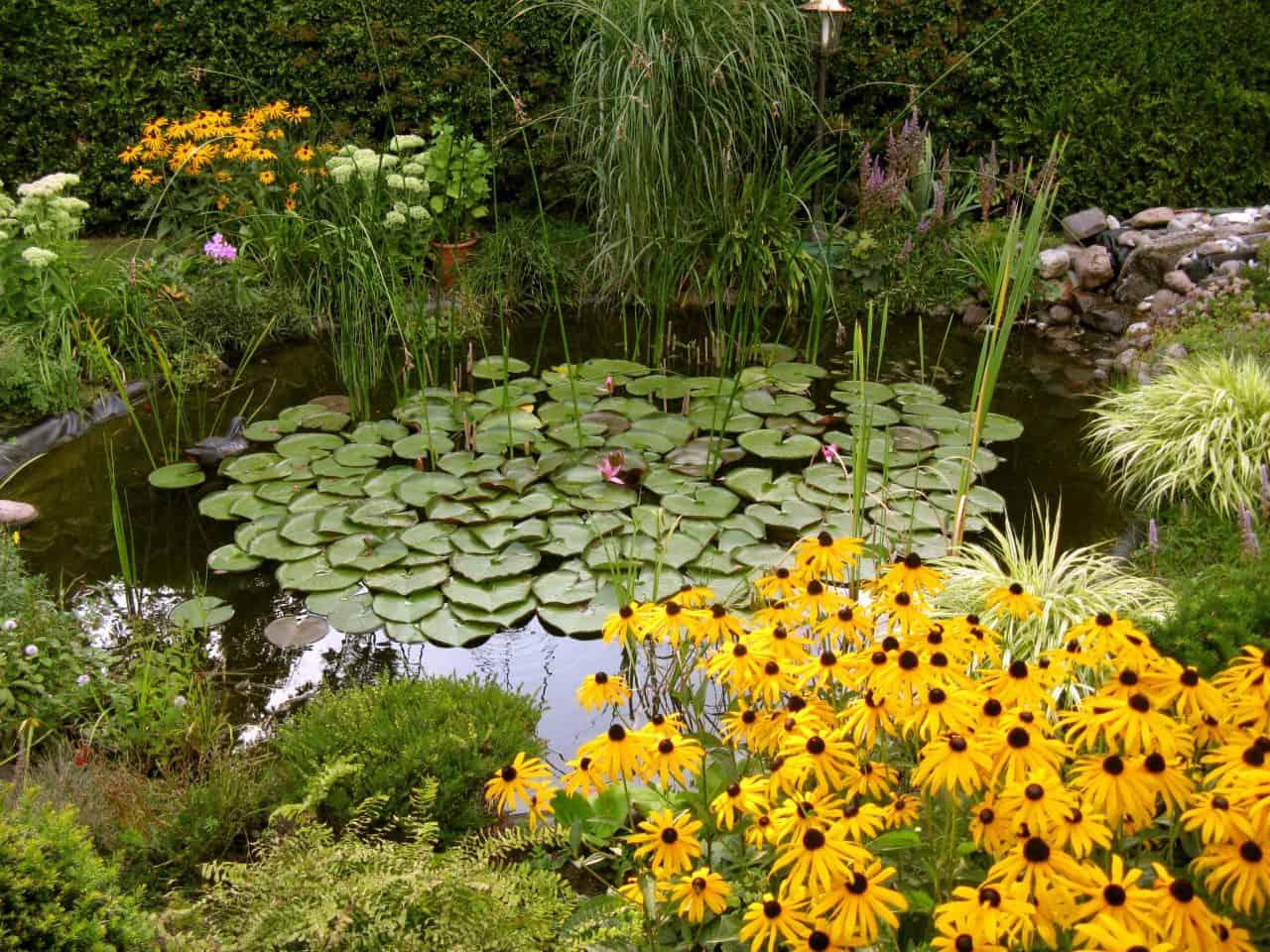 Ein mit einer Seerose bewachsener Teich